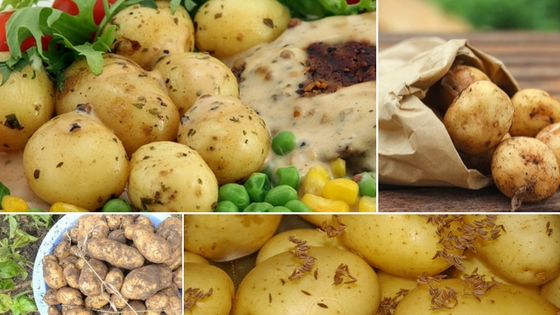 How to Cook New Potatoes on the Stove or in the Microwave