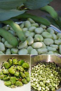 how to cook fresh broad beans easily