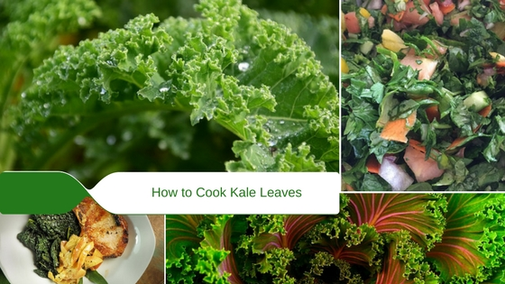 how to cook kale leaves fresh