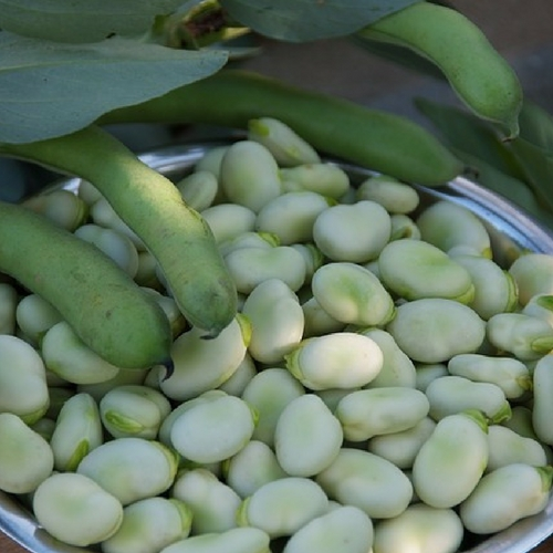 how to easily cook fresh broad beans