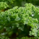 kale how to cook fresh