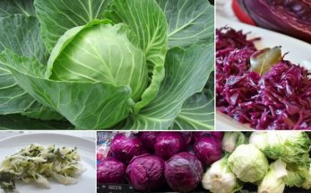 How To Cook Cabbage For the Perfect Colour, Texture & Taste